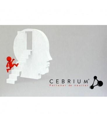 Cebrium x 30cps Cutie