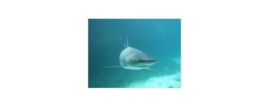 Anticorpii rechinilor ar fi folositi pentru tratarea cancerul mamar