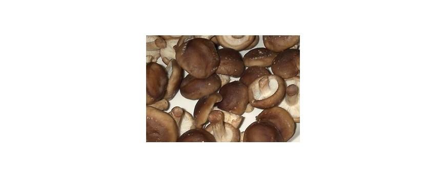 Inedit: Ciupercile shiitake ar putea fi folosite in tratarea si preventia cancerului de col uterin
