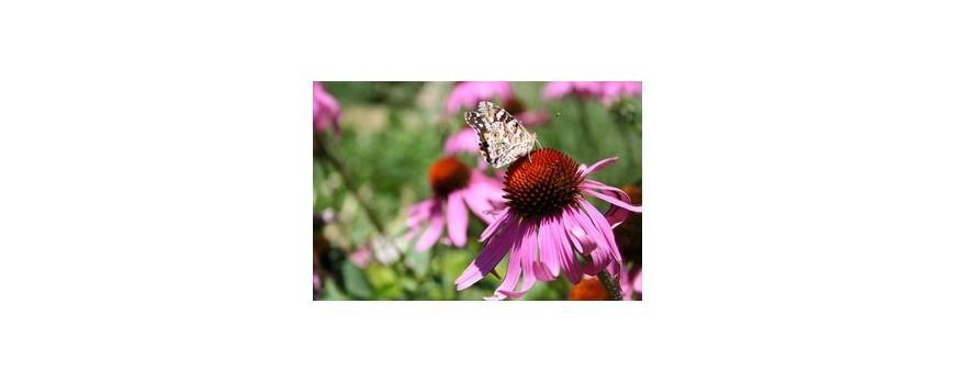 Plantele pot combate  alergiile de sezon